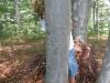 Skrivanje Guzaja v kozjanskih gozdovih