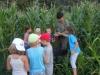 Otroci najdejo razbojnika Guzaja sredi koruze (3)